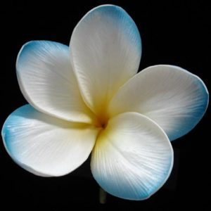 Blue Hawaii Plumeria Sample